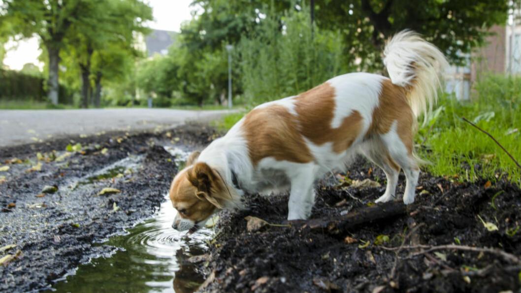 <strong>Lengre turveier:</strong> Venstre ønsker å forlenge turveien langs Nitelva helt til Hvam. Dette betyr at hunden min og jeg kan gå enda lengre turer sammen og kose oss, skriver Margrethe Prahl Reusch. Foto: Scanpix.