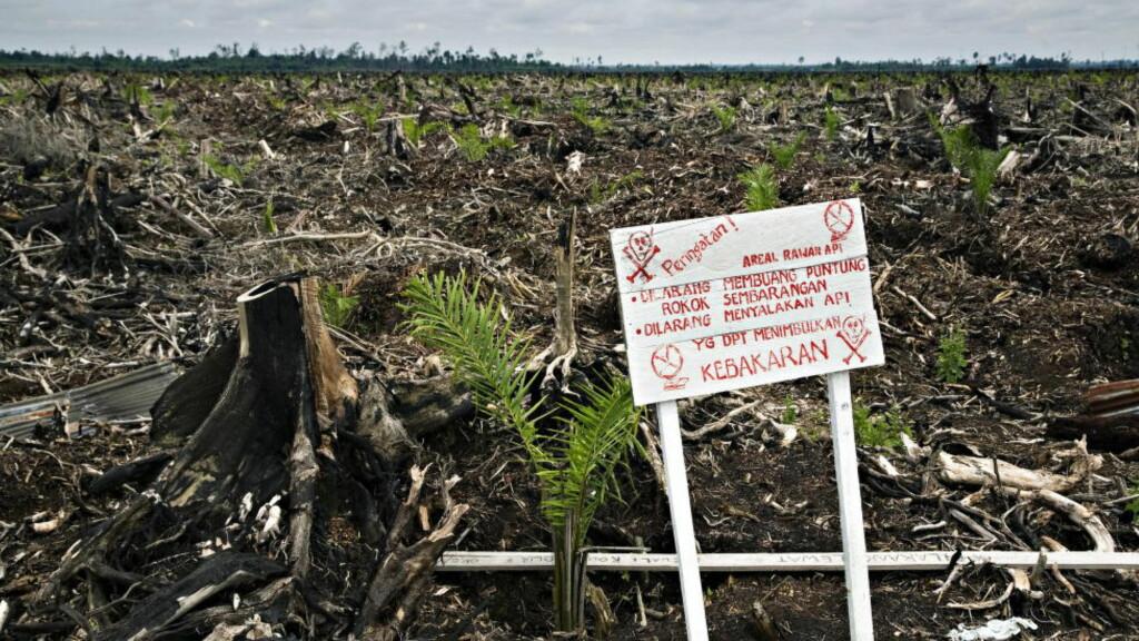 TAPT: Indonesias regnskoger går tapt til fordel for produksjon av palmeolje. Er det Sophie Elise eller Gunnar Tjomlid som har oppskriften på hvordan det kan stoppes? Her: Ødelagt regnskog på Sumatra. Foto: Truls Brekke/Dagbladet