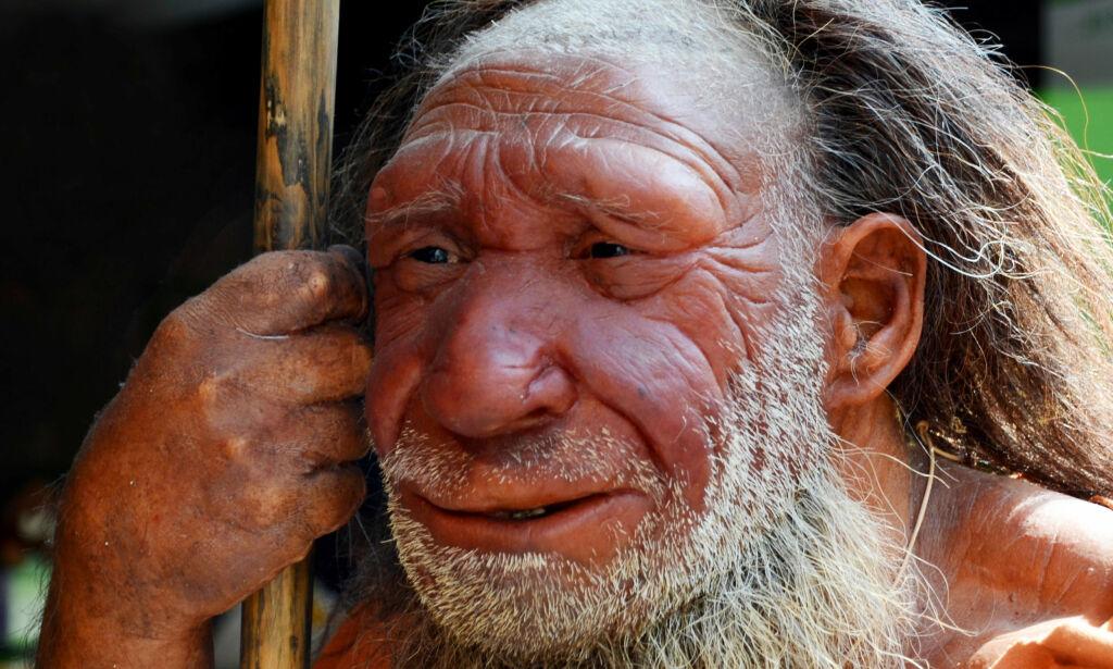 image: Neandertalerne spiste hverandre og lagde verktøy av beinrestene