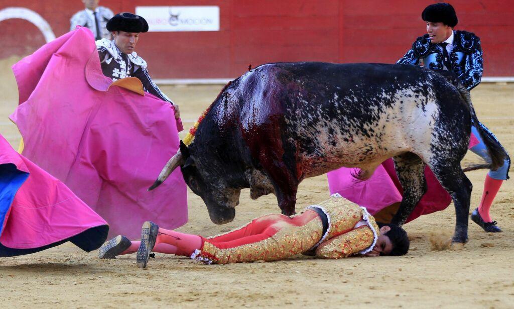 image: I Spania har matadorer slåss mot okser i over 1300 år. I helga seiret 529 kilo tunge Lorenzo