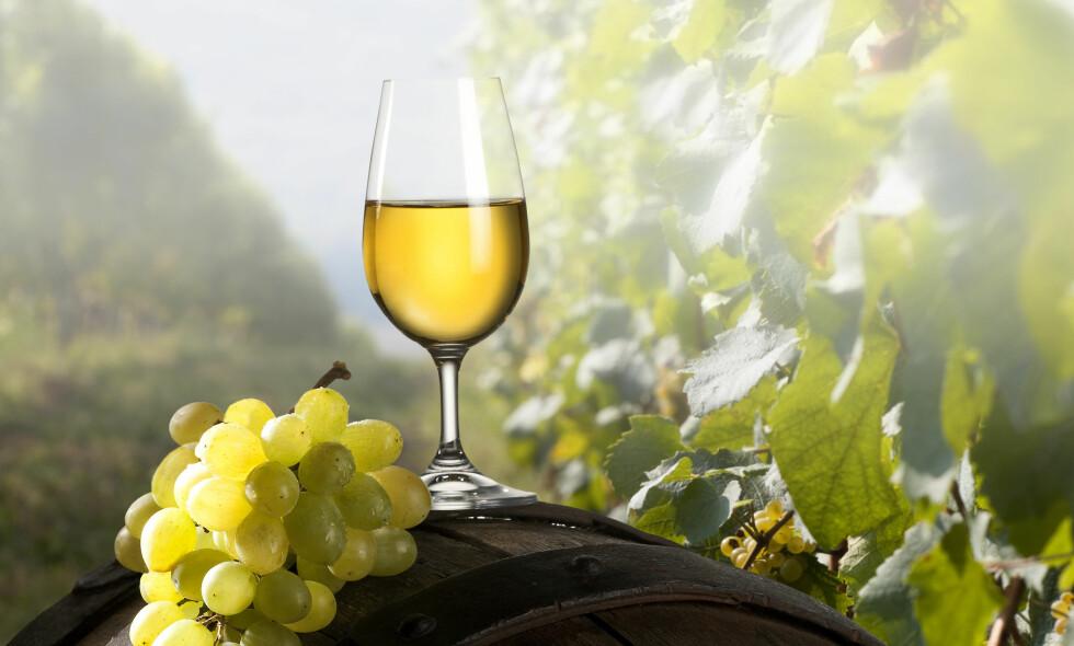 NYT SOMMEREN: Vinmonopolet har et godt utvalgt gode hvitviner. Vi har testet ti til terningkast seks! Foto: JIRKABURSIK / SHUTTERSTOCK / NTB SCANPIX