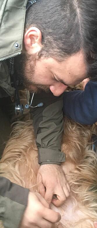 <strong>INGEN GRUNN TIL BEKYMRING:</strong> Leon Cantas, veterinær i Hammerfest, har aldri sett flått så langt nord før. Det er imidlertid ingen grunn til å være bekymret, mener han. Foto: privat.&nbsp;