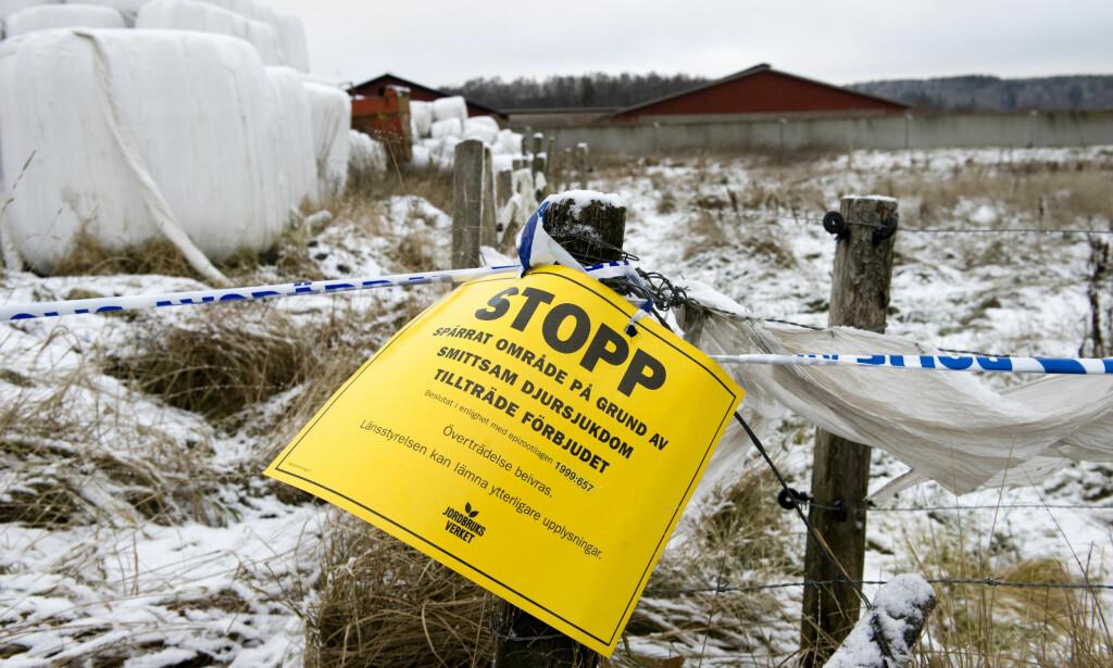 RAMMET SVERIGE: I 2007 døde 13 dyr av miltbrann på en gård utenfor Halland i Sverige. Björn Larsson Rosvall / NTB SCANPIX