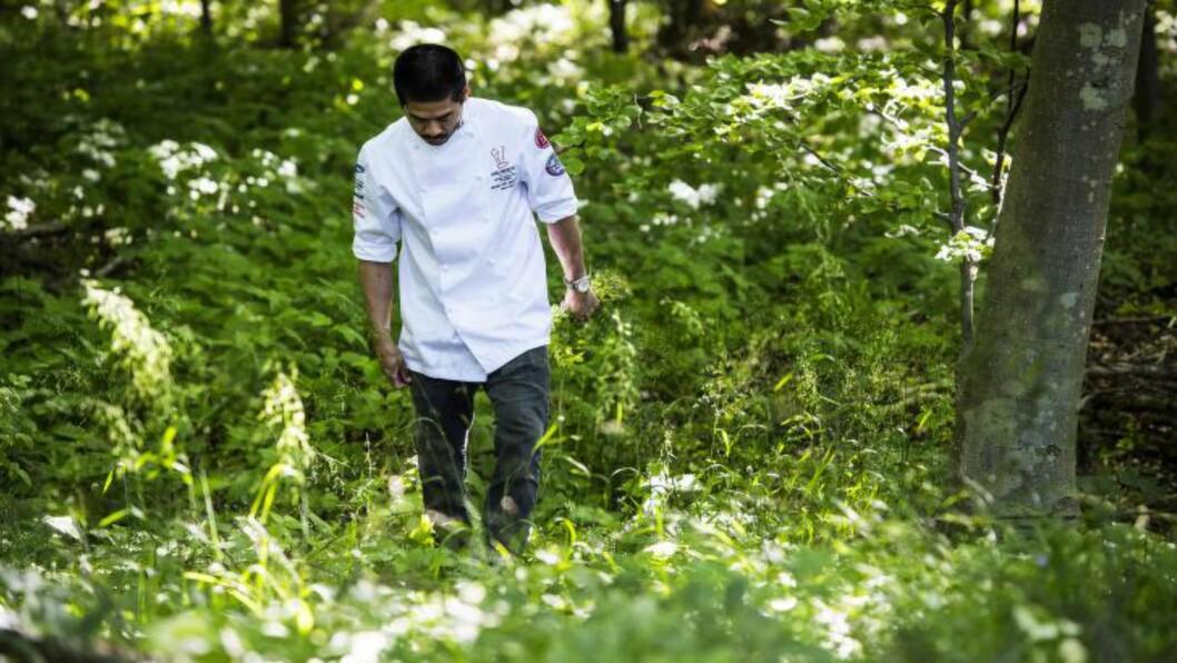 <strong>SANKE:</strong> En del av konkurransen er å finne spiselige vekster i naturen på Lolland, nær grensen til Tyskland. Bildet er fra fjorårets konkurranse. Foto: THE NATIVE COOKING AWARD