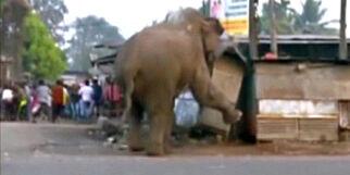 image: Redd elefant gikk berserk etter at den forvillet seg inn i landsby i India