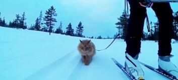 «Hele verden» vil se norske Jesper på skitur
