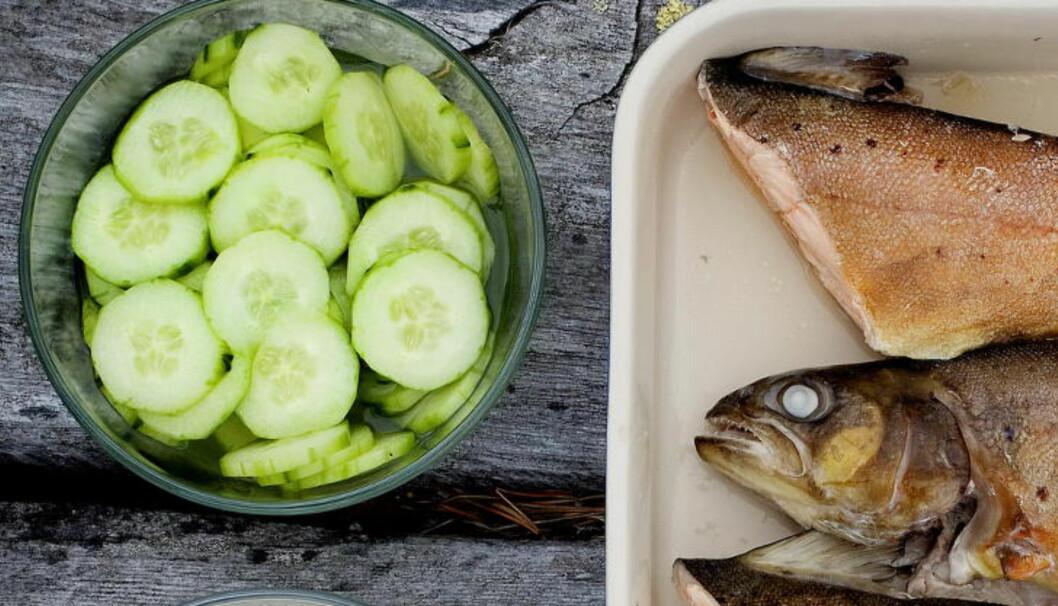 <strong>AGURKSALAT:</strong>  Laks eller ørret liker følge av agurksalat. Selvfølgelig kan du bruke kniven, men ostehøvelen lager fine tynne skiver. Mange lage også lange remser av grønnsaker med den. Foto: METTE MØLLER