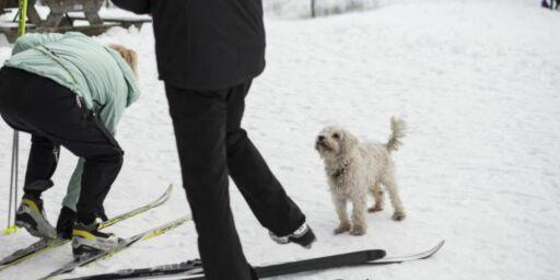 image: Miljøpartiet er bekymret over skismøring