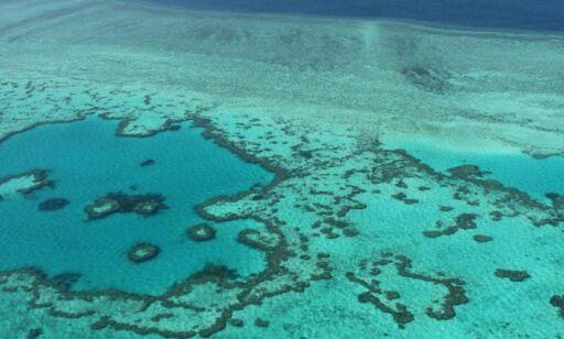 image: - 95 prosent av Great Barrier Reef er alvorlig bleket, og halvparten kan dø innen en måned