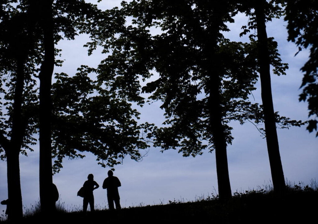 """NATUREN TALER: Trærne lever et mer aktivt og sosialt liv enn de fleste av oss kjenner til. Boka """"Trærnes hemmelige liv"""" utvider opplevelsen av våre (stort sett) tause venner. Foto: Håkon Eikesdal / Dagbladet"""