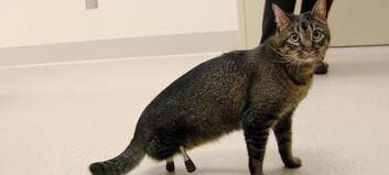 Vincent (3) er ikke som alle andre katter
