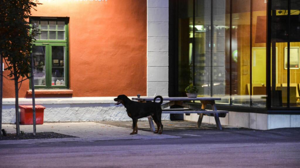 BLE AVLIVET: Hunden som angrep to personer i Elverum i går ble avlivet med sin eiers samtykke. Foto: Foto: Cathrine Loraas Møystad / ØSTLENDINGEN