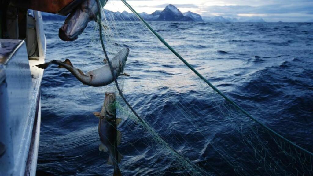 SKREIFISKE: Det årlige skreifisket starter i januar og varer til april. Her fra Gryllefjord på utsiden av Senja.  Foto: CORNELIUS POPPE / NTB SCANPIX