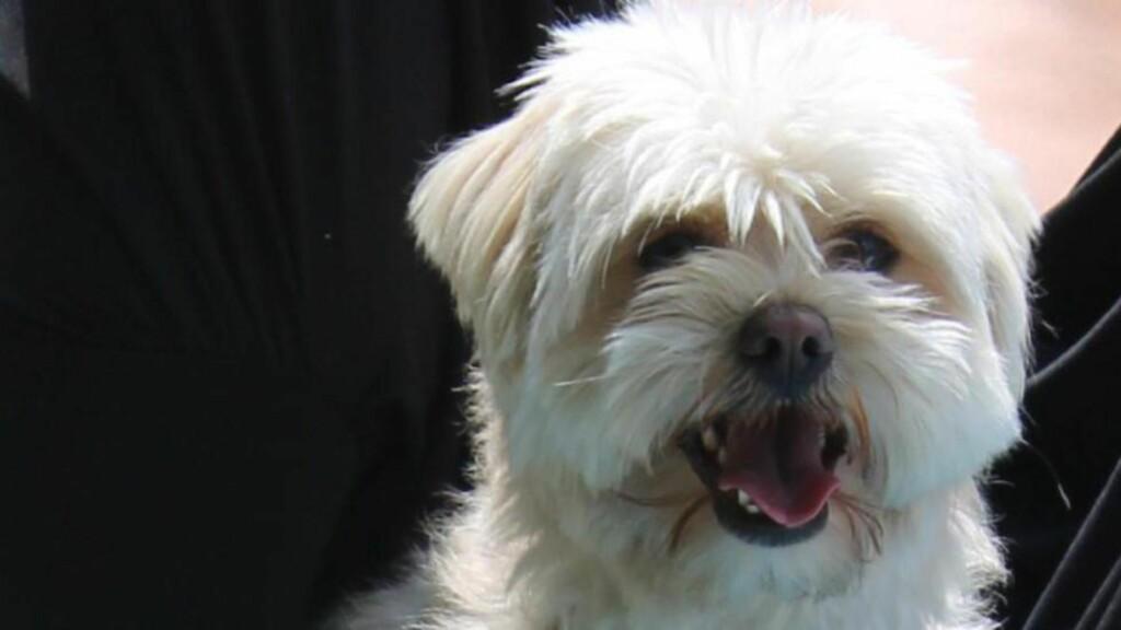 DREPT:  Hunden Lukas ble funnet drept. Foto: Privat