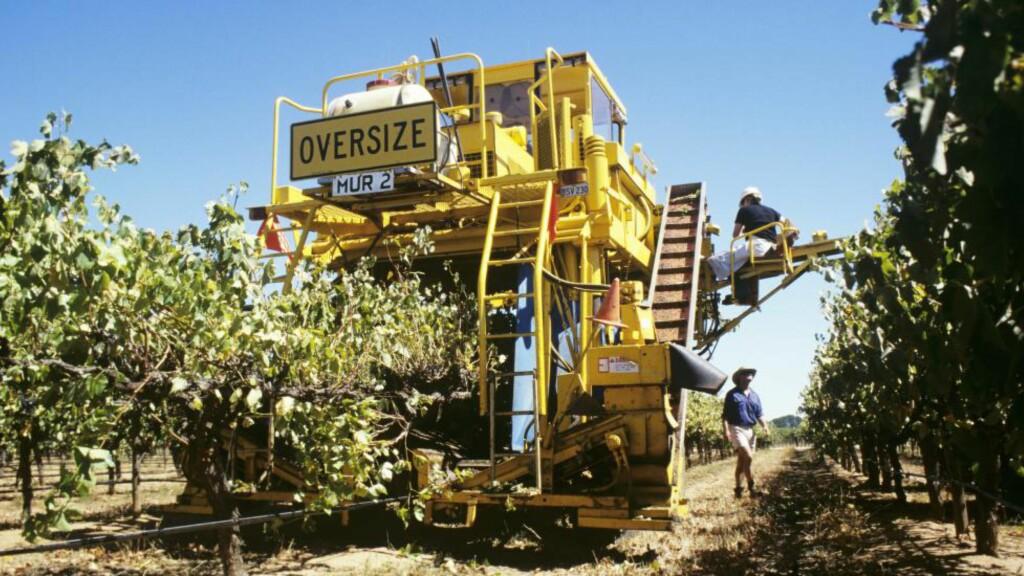 MASKINPLUKKING: Denne kjempen av en drueplukkemaskin finner du påPadthaway i South Australia. Foto: NTB Scanpix