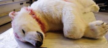 Skjøt isbjørn i leiren - får 10 000 kroner i forelegg