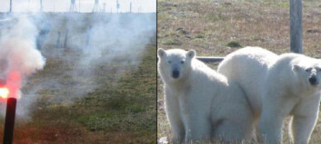 Forskergruppe omringet av sultne og truende isbjørner