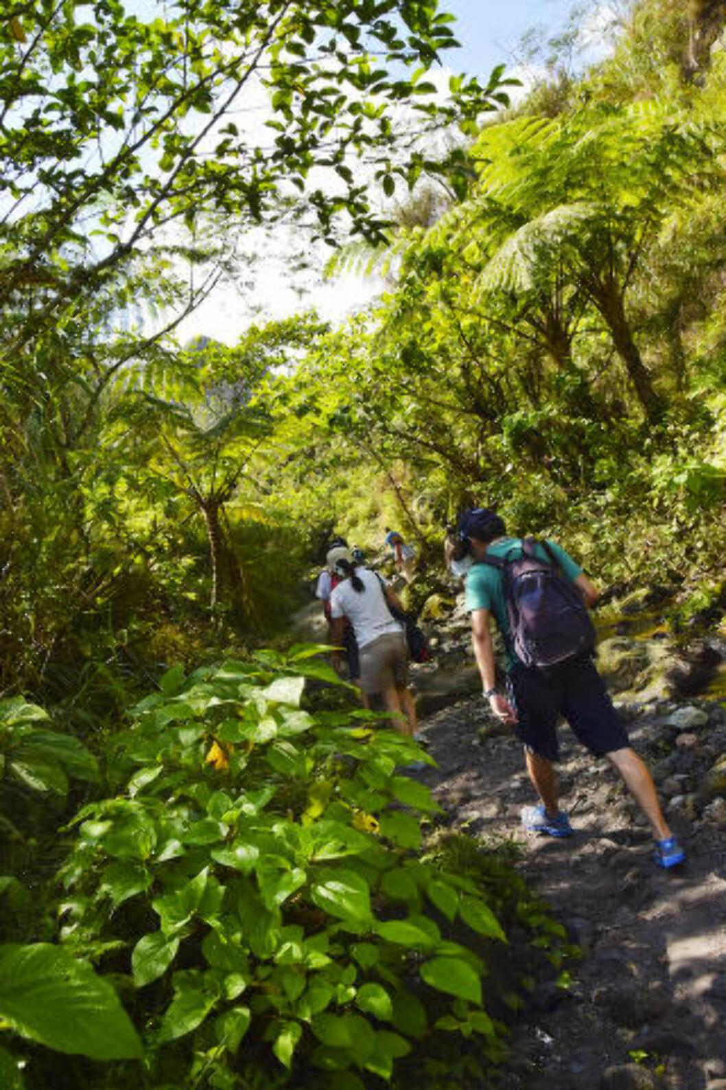 <strong>OVER HALVVEIS:</strong> Mer enn 3000 turister i måneden kommer for å gå den times lange fotturen inn til kraterinnsjøen. Når det er 20 minutter igjen å gå blir det støvete landskapet erstattet med grønn skog og avkjølende vind. Foto: MARI BAREKSTEN