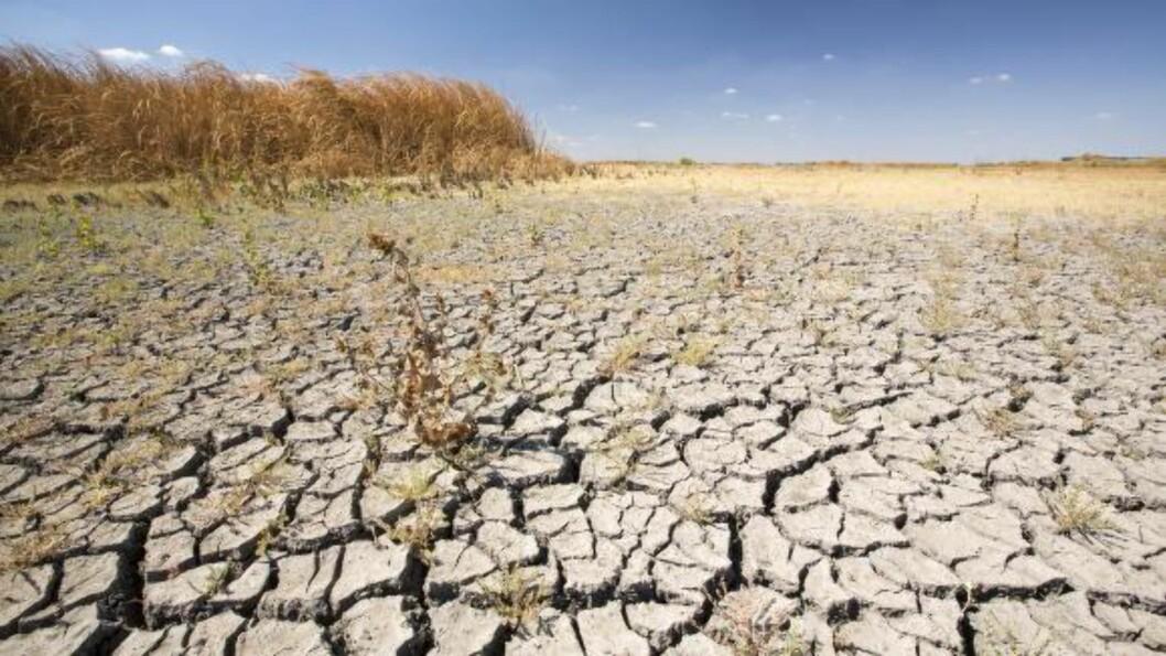 <strong>TØRKE:</strong> Tørken tærer på California, som her i Kern Valley Wildlife Refuge. Fuglene har ingen steder å være, skriver Reuters. Foto: Science Photo Library/NTB Scanpix