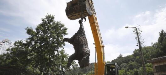 Grusomme bilder fra dyrehagen i Tbilisi. Flere hundre dyr ble fanget i burene sine da flomvannet kom