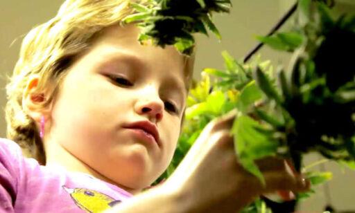 image: Barn som får medisinsk cannabis