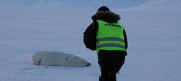 Kvinne skjøt tre ganger med revolver mot isbjørnen