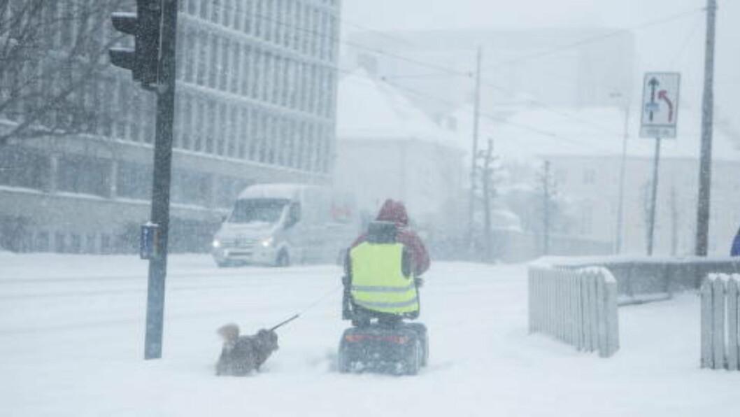 <strong> NORDPOLEN:</strong> Ingen spøk, Nordpolen er det gamle og ekte kvartalsnavnet på Sandaker der en hundeeier er ute og lufter sin firbeinte venn i formiddag. FOTO: CHRISTIAN ROTH CHRISTENSEN/DAGBLADET.