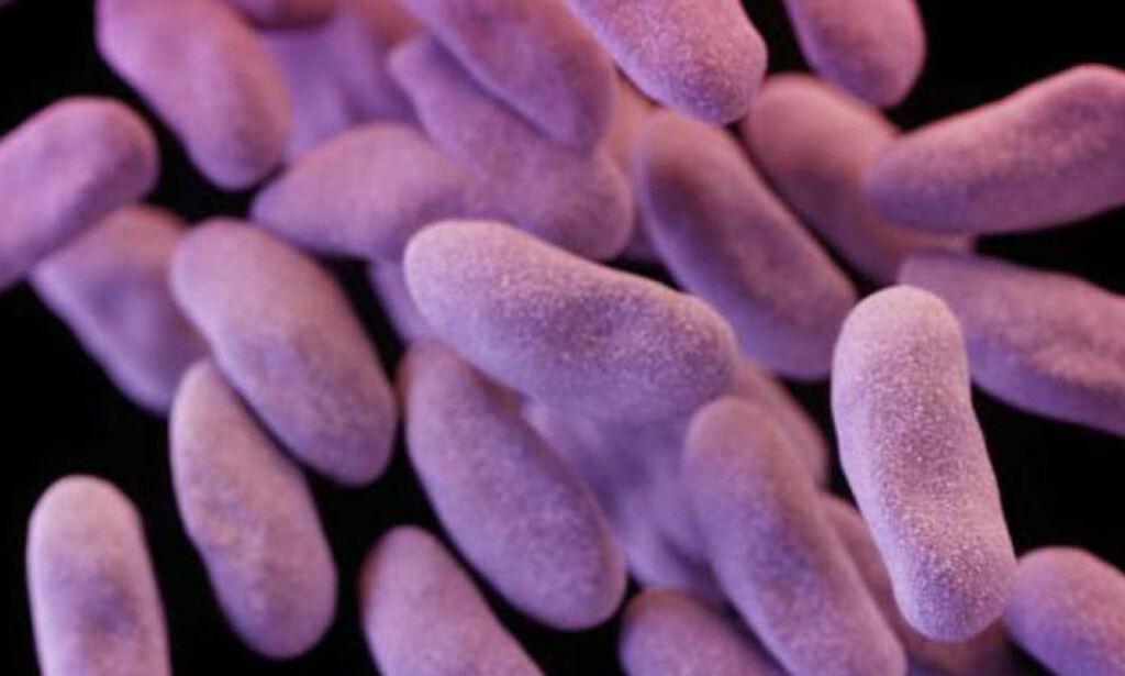 image: Slik skal amerikanerne bekjempe den dødelige superbakterien de selv har skapt