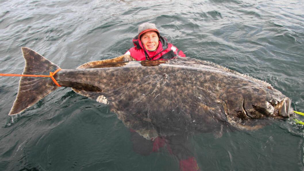 GIGANT: Erik Axner var fredag med på å dra opp, på stang, en kveite som var 100,4 kg tung og 196 cm lang. Etter fotoseansen ble kveita sluppet ut i friheten i havet igjen. Foto: Jonathan Jansson / Nordic Sea Angling / NTB Scanpix