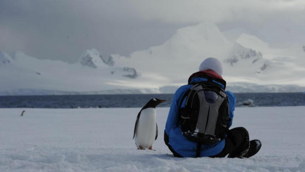 IKKE STRESS: Sett deg ned og nyt utsikten, og plutselig vralter det en pingvin forbi. De beste opplevelsene kommer når du tar det med ro. Foto: TORILD MOLAND
