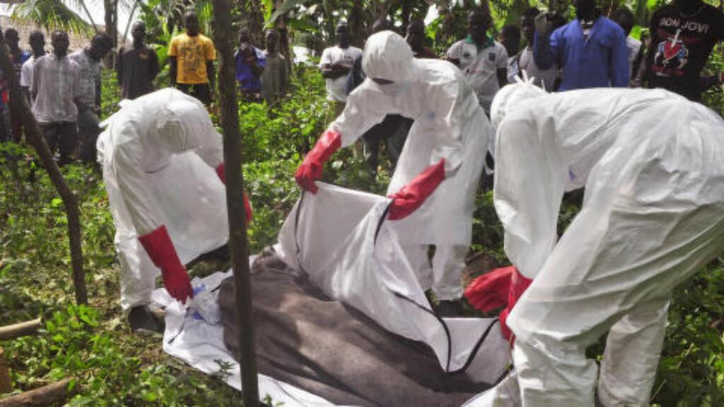 5000 DØDE:  Helsearbeidere dekker over liket til en mann som man mistenker ble smittet av ebola i Monrovia i Liberia. Foto: AP Photo/ Abbas Dulleh
