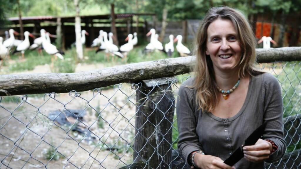 """POLENS STORKEMAMMA: Veterinæren Ewa Ruminska behandler hvert år hundrevis med storker som har fått skader av moderne innretninger. Nå håper hun å få satt en stopper for """"massakrene"""" som finner sted når trekkfuglene mellomlander i Libanon.  Foto:Asbjørn Svarstad"""