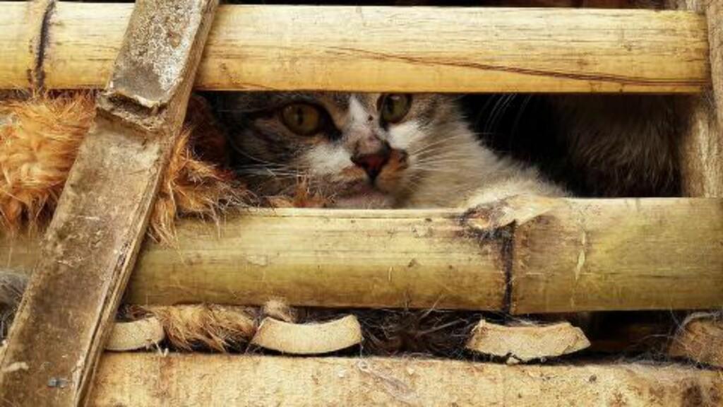 MANGE DØDE: Flere av kattene døde under de trange forholdene. Foto: AFP / NTB Scanpix