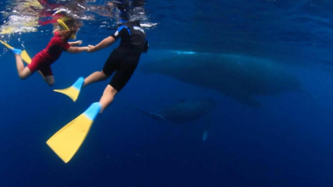 <strong>SVØMMER MED HVALER:</strong> Da undervannsfotograf Darren Rice og kona Nina Rice for noen år siden forlot Storbritannia for å ta over Matafonua resort på Tonga, ble Stillehavet barnas ny lekeplass. Foto: DARREN RICE