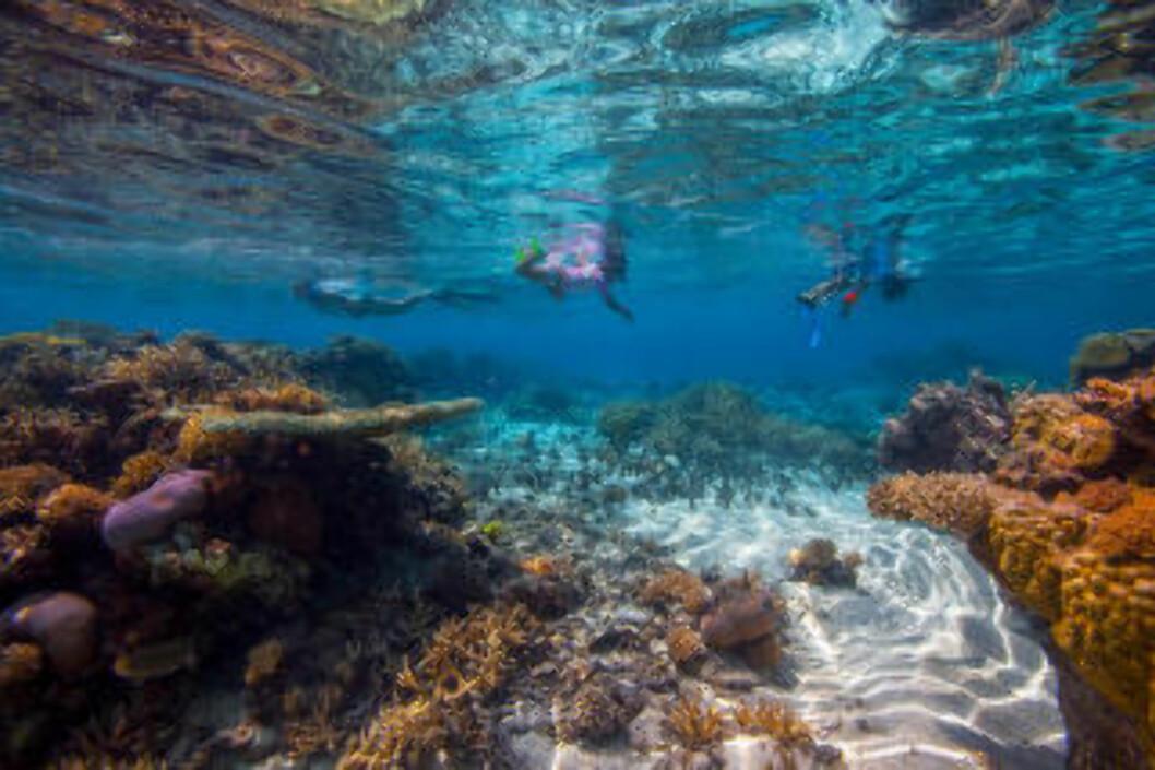<strong>PÅ GRUNNA:</strong> Det er også mye spennende å se om du oppholder deg på grunnere vann. Foto: DARREN RICE