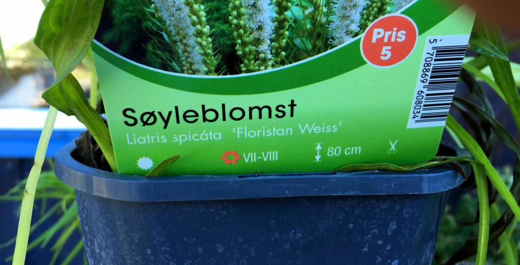 <strong><b>LES PÅ ETIKETTEN:</strong></b> Sjekk hvilken klimasone du bor i, og les på etiketten. Der finner du viktig informasjon som kan fortelle deg om akkurat denne planten vil kunne trives hos deg, der du har tenkt å plante den.  - Er det noe du ikke skjønner, så spør på hagesenteret, oppfordrer Holter-Hovind. Foto: KRISTIN SØRDAL