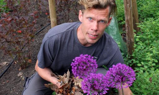 image: Slik får du en lettstelt hage