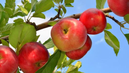 Slik planter du frukttrær og bærbusker i hagen og på terrassen
