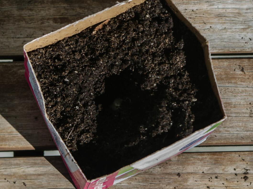<strong><b>4:</strong></b> Dytt feddet ned i hullet. Skallet kan godt være på. Foto: AKSEL RYNNING