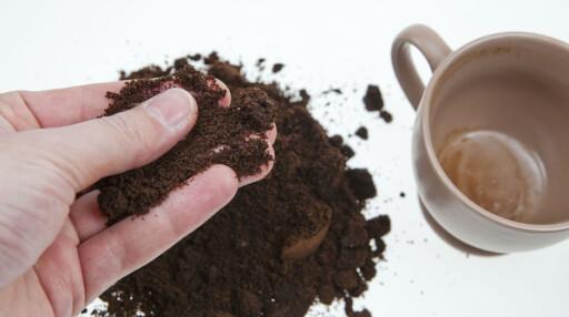 KAFFEGRUT: Erling Fløistad anbefaler kaffegrut for å beskytte planter, som kjøkkenhagen, ved å legge 1-2 centimeter kaffegrut rundt plantene. Foto: PER ERVLAND