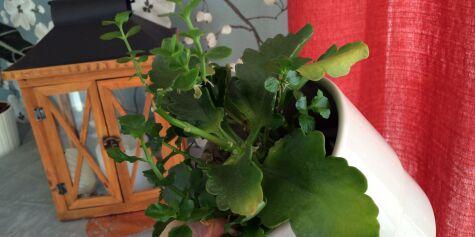 image: Blomstene du kan sette igjen på hytta