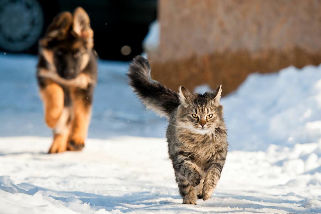 <b>LA DEM KOMME INN:</b> Ha tilsyn med dyra, og la dem komme inn når de viser tegn på at de fryser, oppfordrer veterinæren. Foto: SHUTTERSTOCK/RITA KOCHMARJOVA/NTB SCANPIX