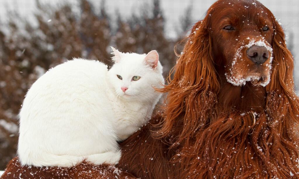 image: Se når det er for kaldt for kjæledyra dine