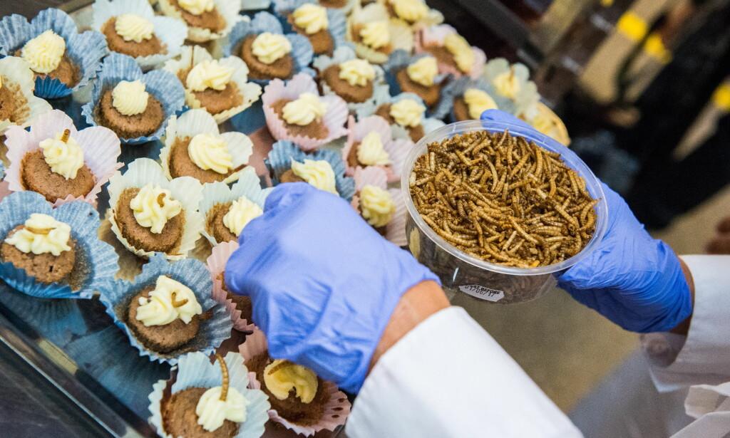 GRESSHOPPEMEL: Søte saker går alltid hjem. Her muffins bakt med sirissmel toppet med melbillelarve. Foto: Endre Vellene / Dagbladet