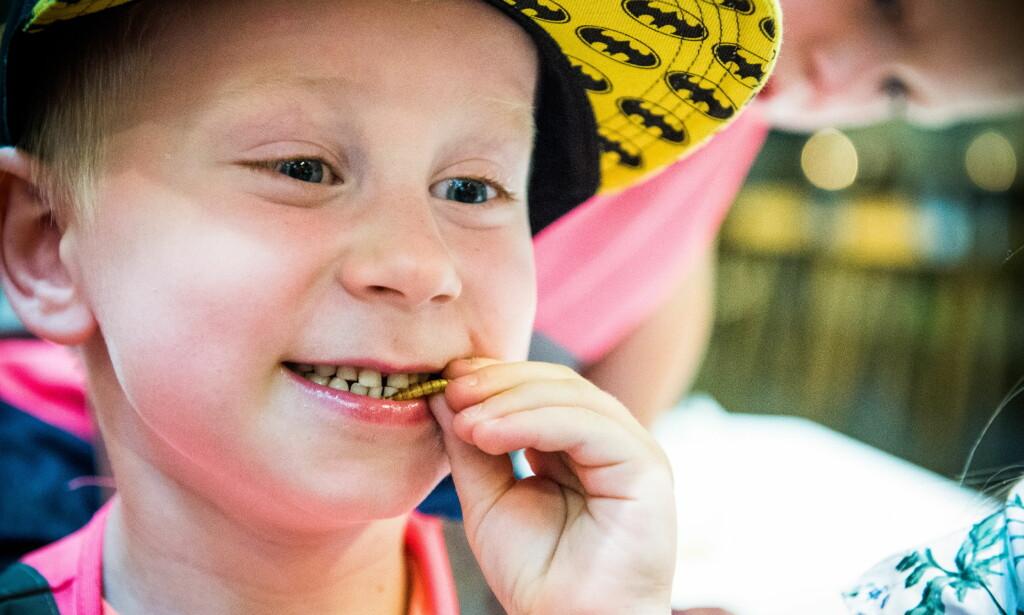 MODIG : Benjamin (5) fra Trolltangen naturbarnehage i Halden, tygger gjerne på en melbillelarve., så lenge de voksne forsikrer at den er dyrket fram på en farm for å bli mat. Til høyre Andora (5) som kunne spist hundre muffins med mel laget av små gresshopper. Foto: Endre Vellene