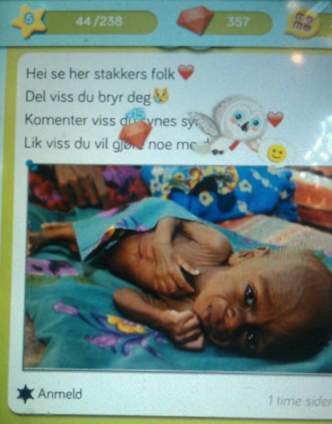 <strong>«SE HER, STAKKARS FOLK:</strong> Bilder som dette legges ut på Momio. Skjermdump: Momio