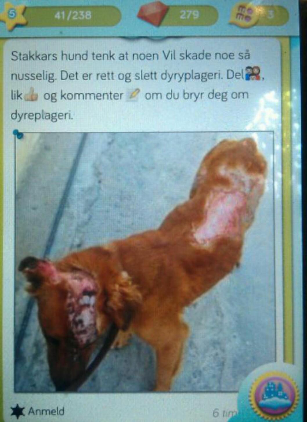 <strong>DYREMISHANDLING:</strong> «Tenk at noen vil skade noe så nusselig», skriver et barn på Momio, over et bilde av en stygt mishandlet hund. Skjermdump: Momio