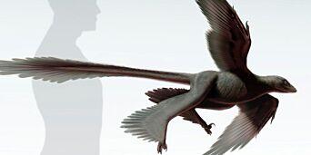 image: - Oi! Det var en merkelig fugl