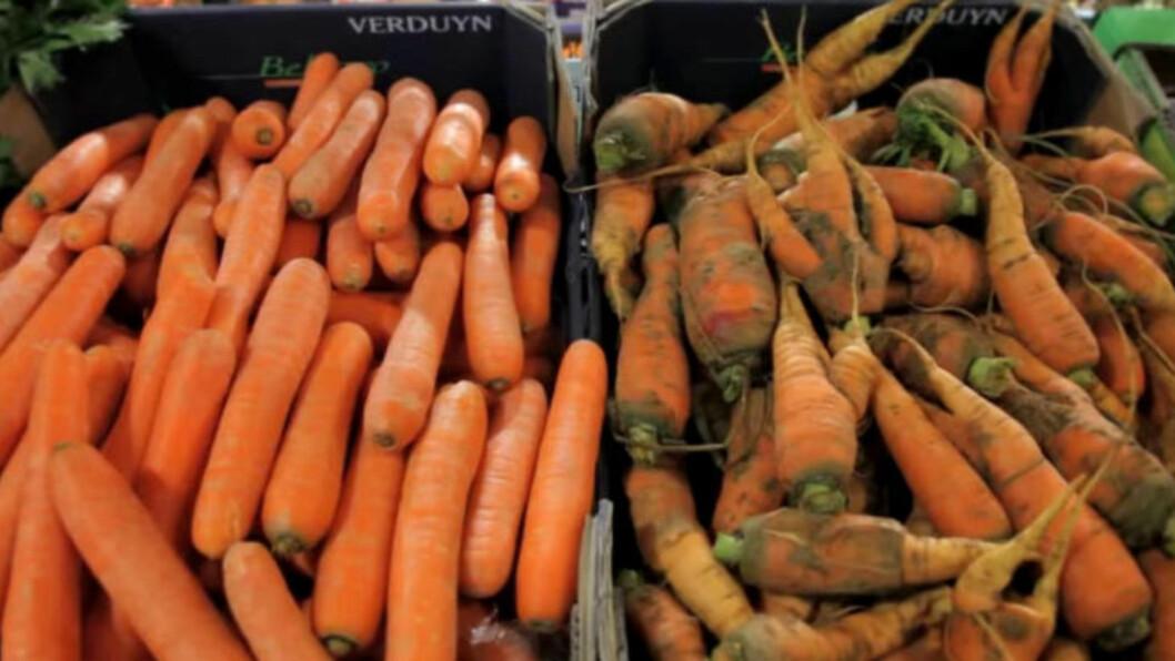 <strong>KRESNE:</strong> I den franske butikkjeden Intermarché kan du velge mellom «perfekte» og deformerte grønnsaker. Norske butikkjeder erfarer at norske forbrukere er for kresne til å kunne tilby det samme her til lands. Foto: Intermaché