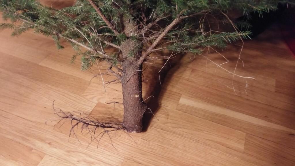 FRISERES: De nederste 20 centimeterene må være fri for kvist og kvas. Foto: BRYNJULF BLIX